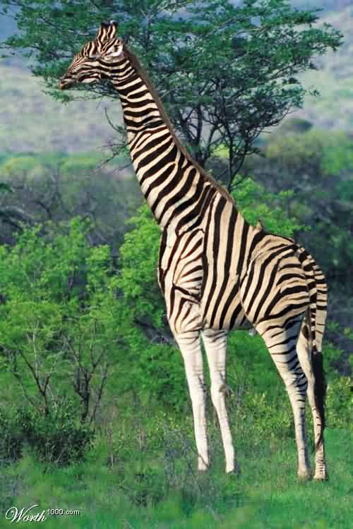 foto de una animal exótico que esconde un error